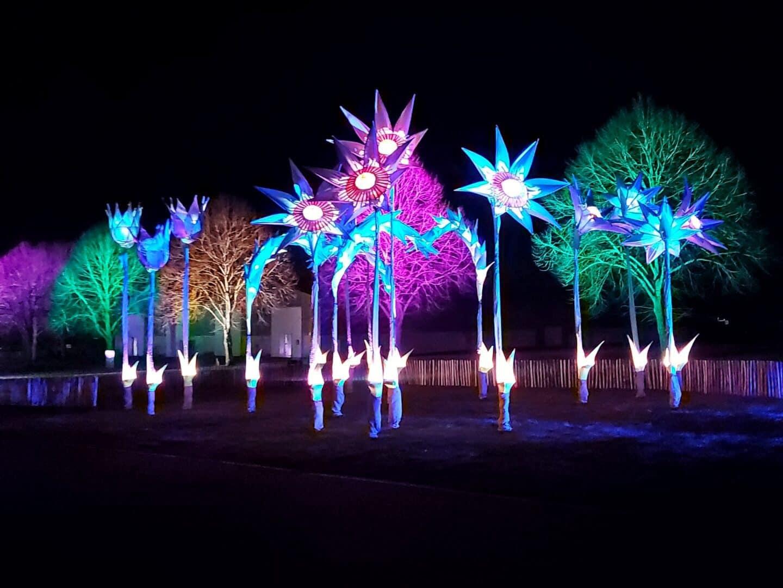Huge floral lights at Malvern Winter Glow December 2020