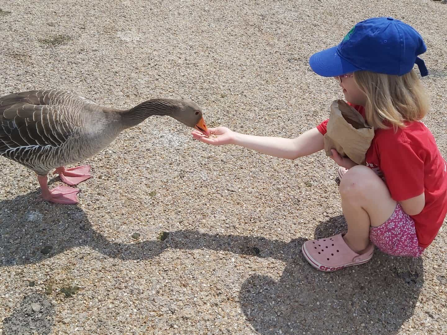 Wetland Heroes app: Family day out at WWT Slimbridge – review
